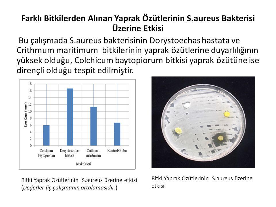 Farklı Bitkilerden Alınan Yaprak Özütlerinin S.aureus Bakterisi Üzerine Etkisi Bu çalışmada S.aureus bakterisinin Dorystoechas hastata ve Crithmum maritimum bitkilerinin yaprak özütlerine duyarlılığının yüksek olduğu, Colchicum baytopiorum bitkisi yaprak özütüne ise dirençli olduğu tespit edilmiştir.