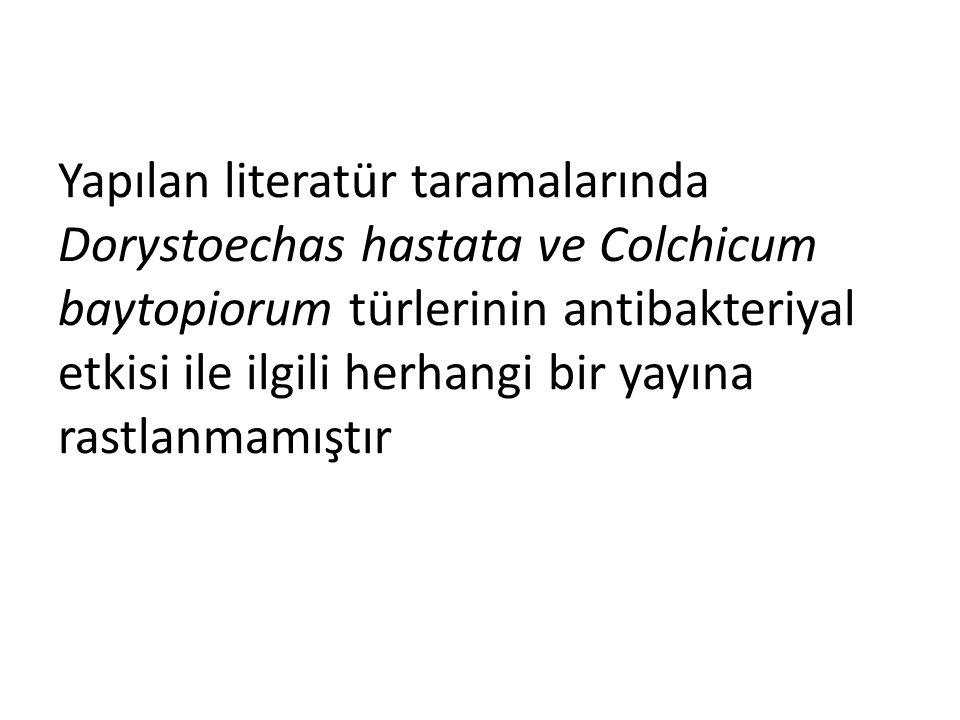 Yapılan literatür taramalarında Dorystoechas hastata ve Colchicum baytopiorum türlerinin antibakteriyal etkisi ile ilgili herhangi bir yayına rastlanmamıştır