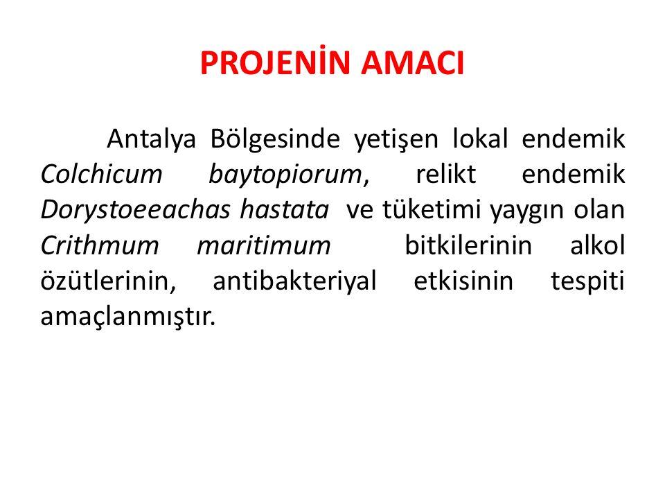 BİTKİLERİN LOKASYONLARI Baytop çiğdemi olarak bilinen Colchicum baytopiorum (Lokasyon: Antalya Konyaaltı; Deveboynu- Kaplankapanı mevkii arası, 70 m, 31.01.2013)