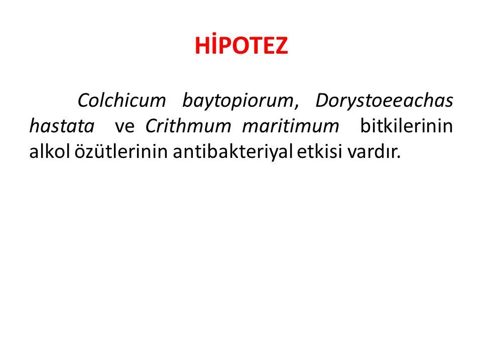 HİPOTEZ Colchicum baytopiorum, Dorystoeeachas hastata ve Crithmum maritimum bitkilerinin alkol özütlerinin antibakteriyal etkisi vardır.