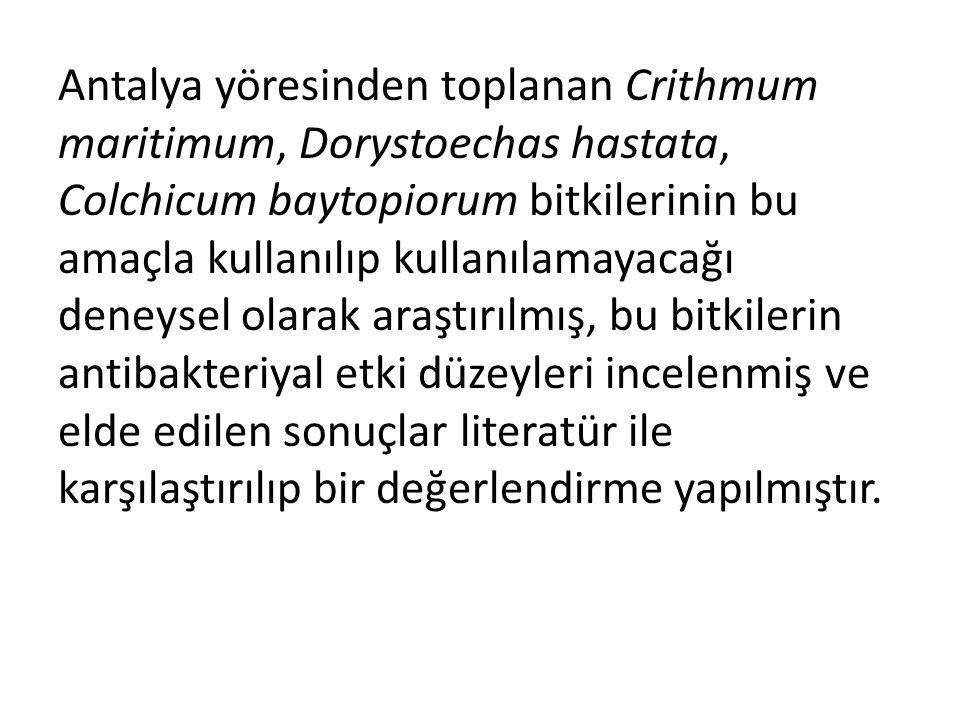 Antalya yöresinden toplanan Crithmum maritimum, Dorystoechas hastata, Colchicum baytopiorum bitkilerinin bu amaçla kullanılıp kullanılamayacağı deneysel olarak araştırılmış, bu bitkilerin antibakteriyal etki düzeyleri incelenmiş ve elde edilen sonuçlar literatür ile karşılaştırılıp bir değerlendirme yapılmıştır.