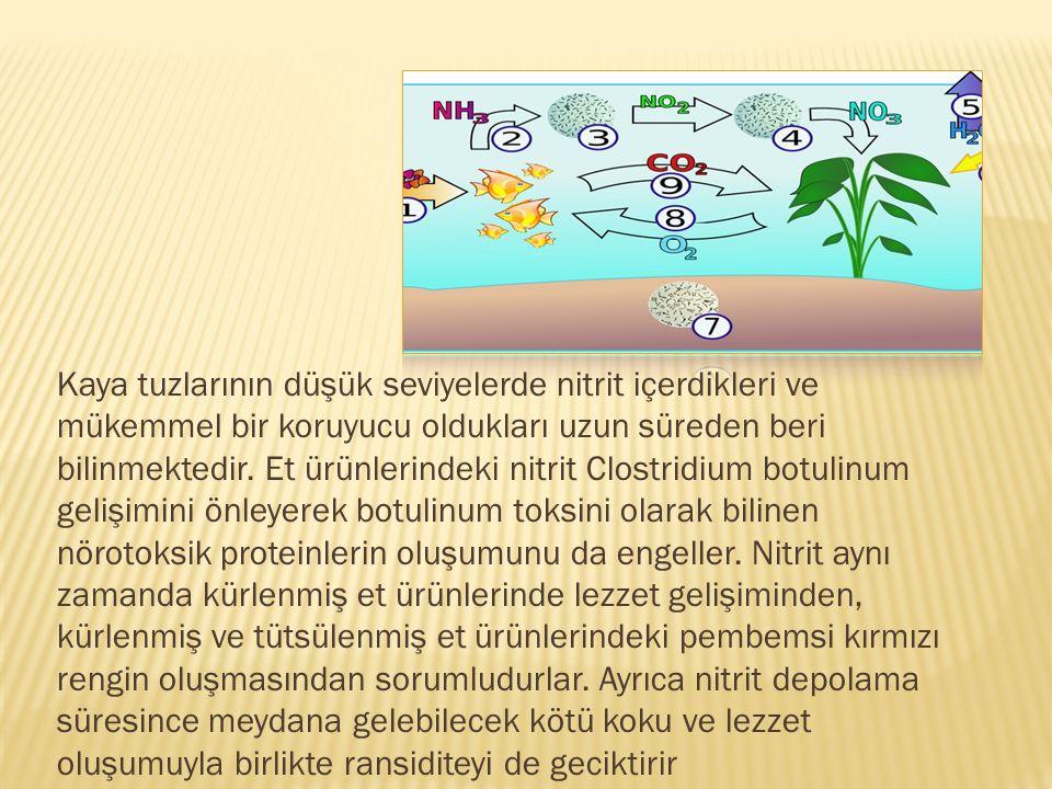 Kaya tuzlarının düşük seviyelerde nitrit içerdikleri ve mükemmel bir koruyucu oldukları uzun süreden beri bilinmektedir. Et ürünlerindeki nitrit Clost