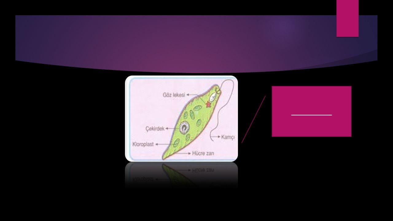 ------------------LOUİS PASTEUR----------------- FFransız bilim insanı Louis PASTEUR, mikroskobik canlıların uygun ortam bulduğunda çoğaldıklarını yaptığı çalışmalarla kanıtlamıştır ve kuduz aşısını bulmuştur.