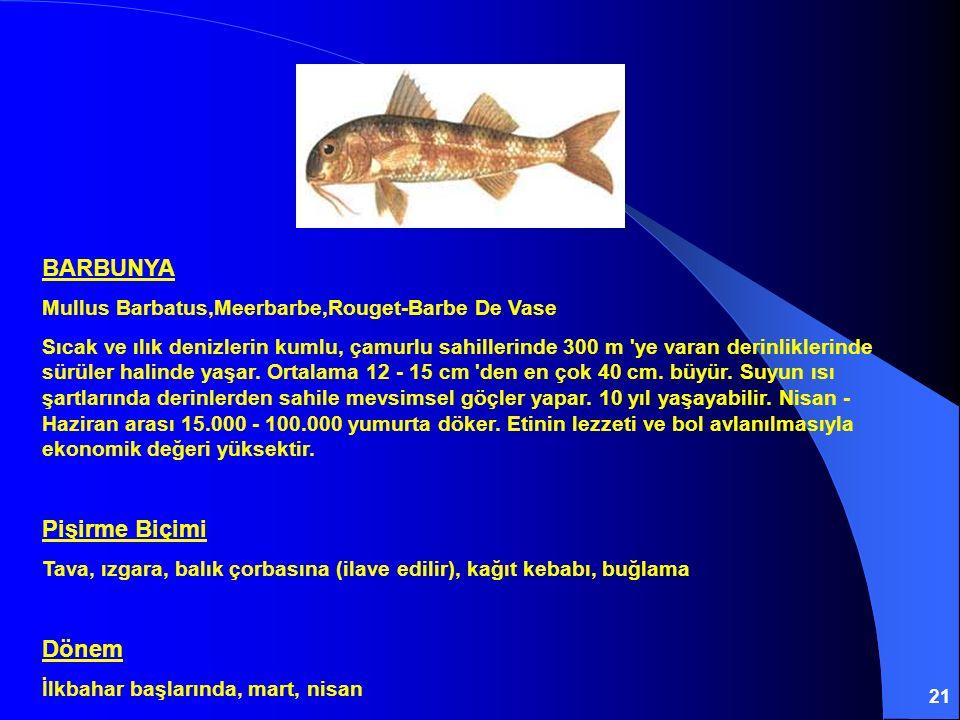 21 BARBUNYA Mullus Barbatus,Meerbarbe,Rouget-Barbe De Vase Sıcak ve ılık denizlerin kumlu, çamurlu sahillerinde 300 m 'ye varan derinliklerinde sürüle