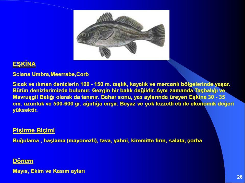 26 EŞKİNA Sciana Umbra,Meerrabe,Corb Sıcak ve ılıman denizlerin 100 - 150 m. taşlık, kayalık ve mercanlı bölgelerinde yaşar. Bütün denizlerimizde bulu