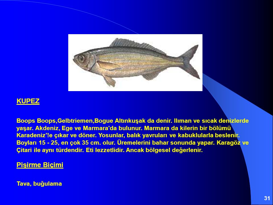 31 KUPEZ Boops Boops,Gelbtriemen,Bogue Altınkuşak da denir. Ilıman ve sıcak denizlerde yaşar. Akdeniz, Ege ve Marmara'da bulunur. Marmara da kilerin b