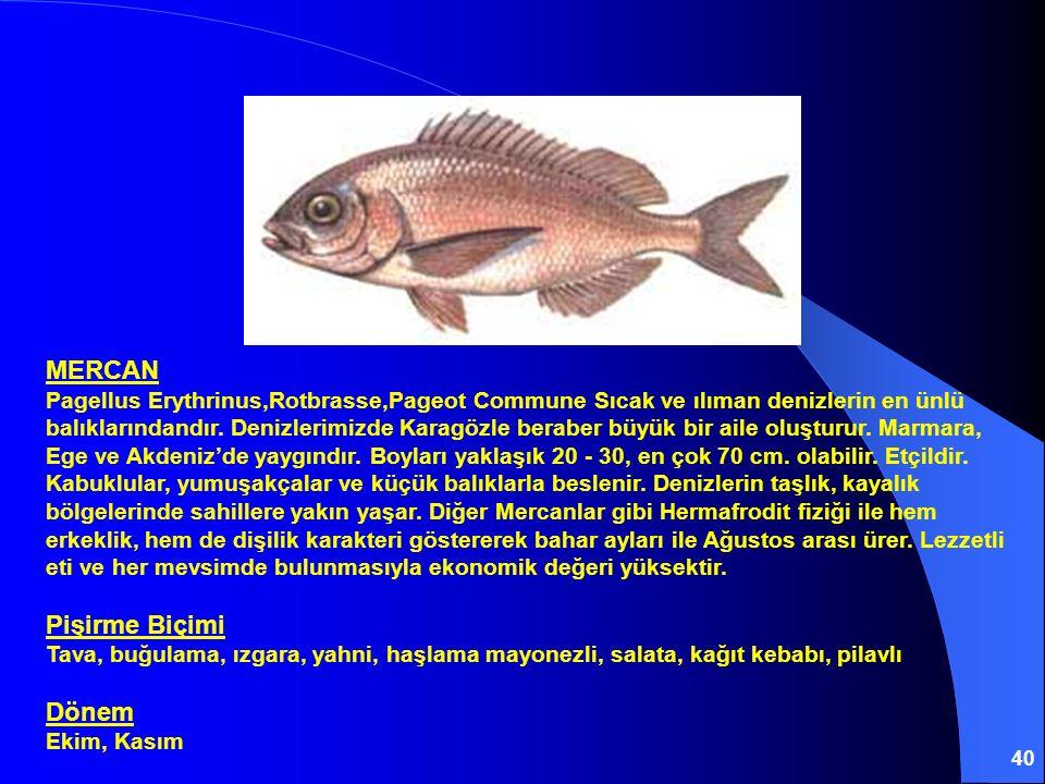 40 MERCAN Pagellus Erythrinus,Rotbrasse,Pageot Commune Sıcak ve ılıman denizlerin en ünlü balıklarındandır. Denizlerimizde Karagözle beraber büyük bir