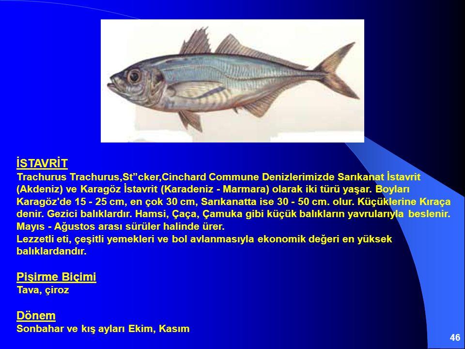 """46 İSTAVRİT Trachurus Trachurus,St""""cker,Cinchard Commune Denizlerimizde Sarıkanat İstavrit (Akdeniz) ve Karagöz İstavrit (Karadeniz - Marmara) olarak"""