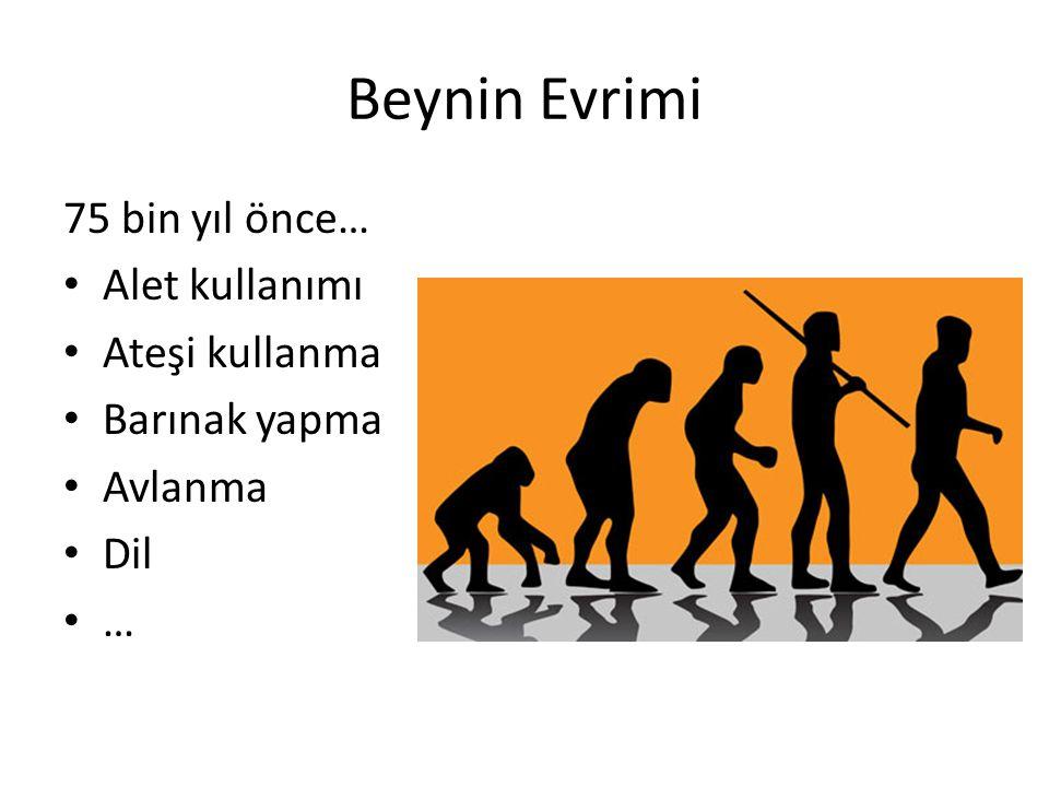 Beynin Evrimi 75 bin yıl önce… Alet kullanımı Ateşi kullanma Barınak yapma Avlanma Dil …