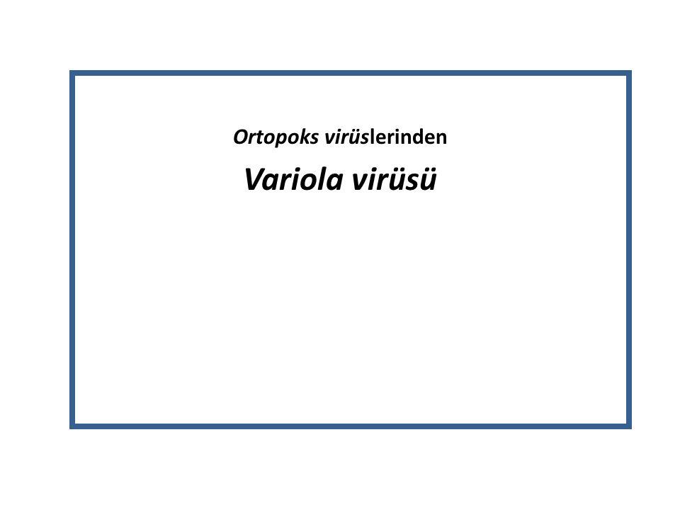 Ortopoks virüslerinden Variola virüsü