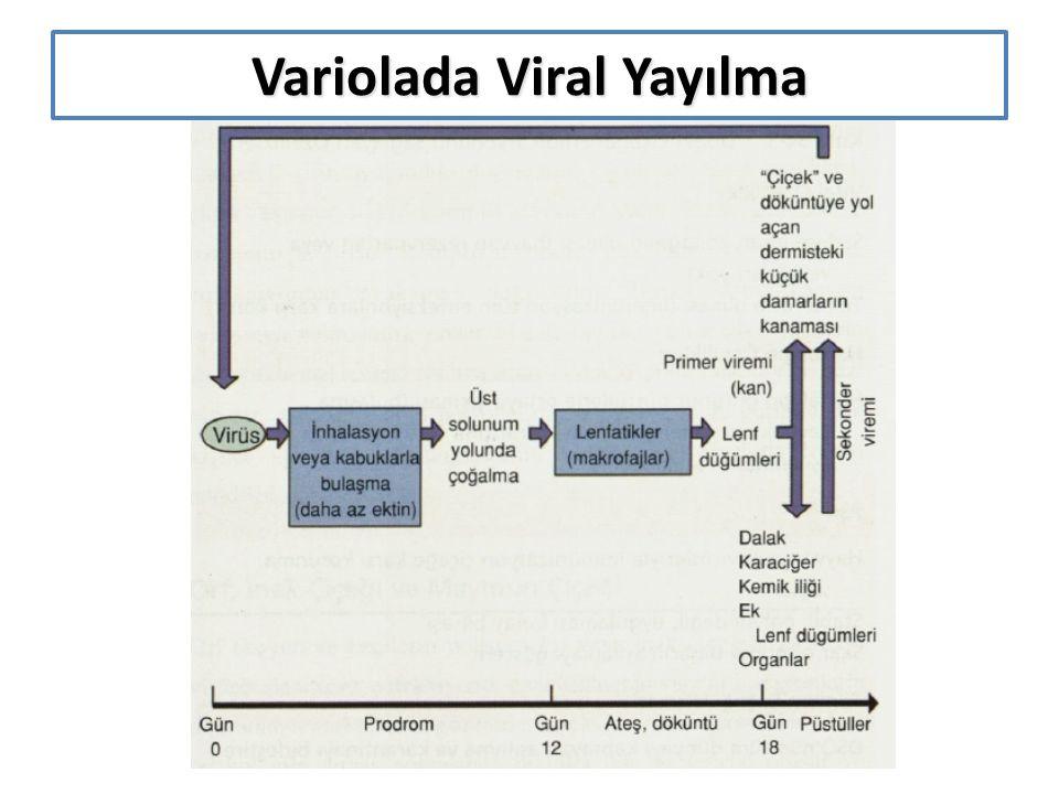 Variolada Viral Yayılma