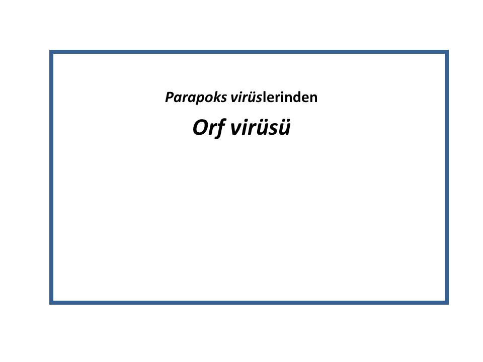 Parapoks virüslerinden Orf virüsü