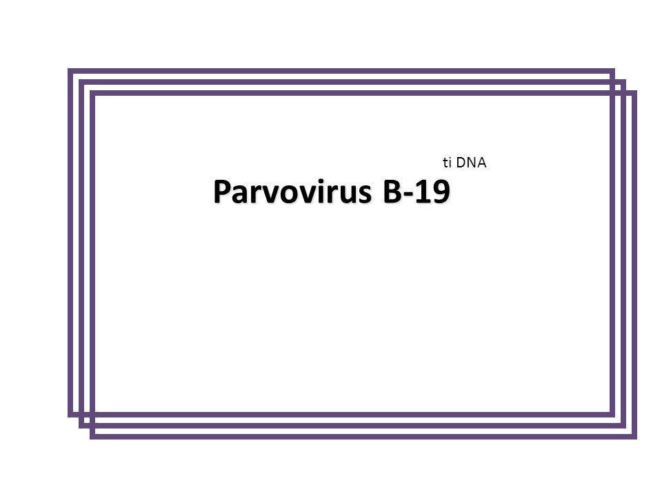 Parvovirus B-19 ti DNA