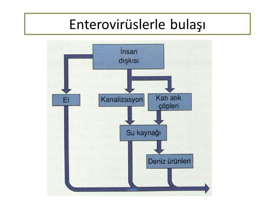 Enterovirüslerle bulaşı