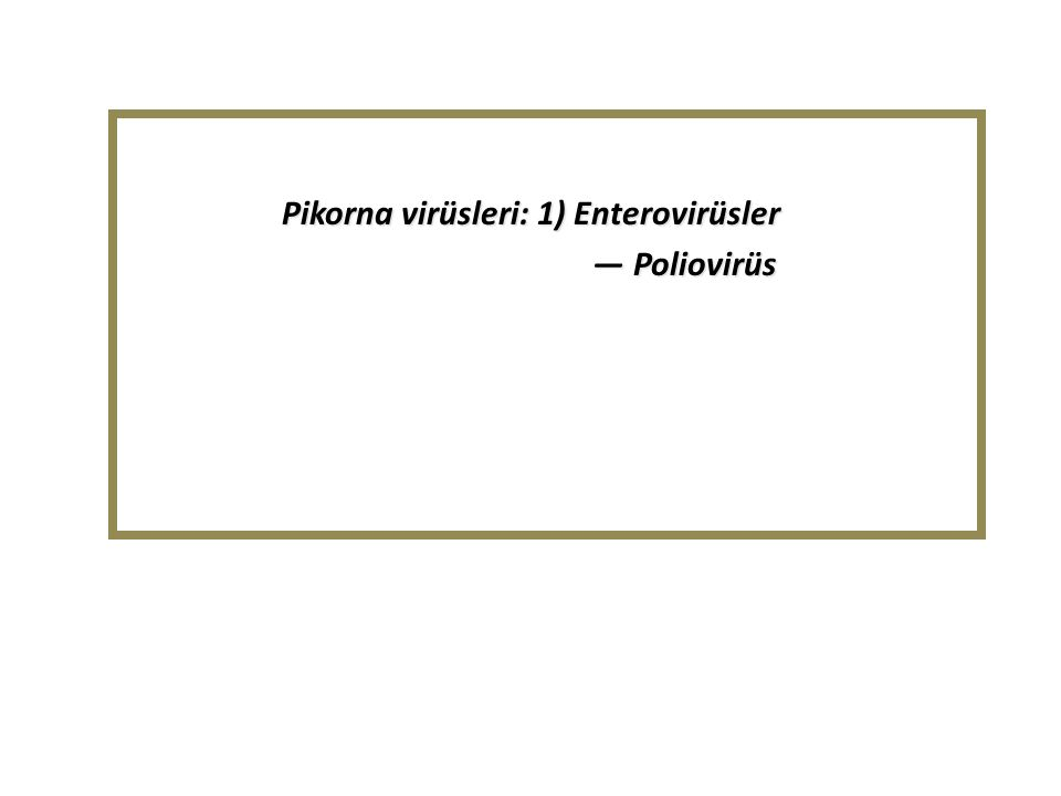 Pikorna virüsleri: 1) Enterovirüsler — Poliovirüs — Poliovirüs