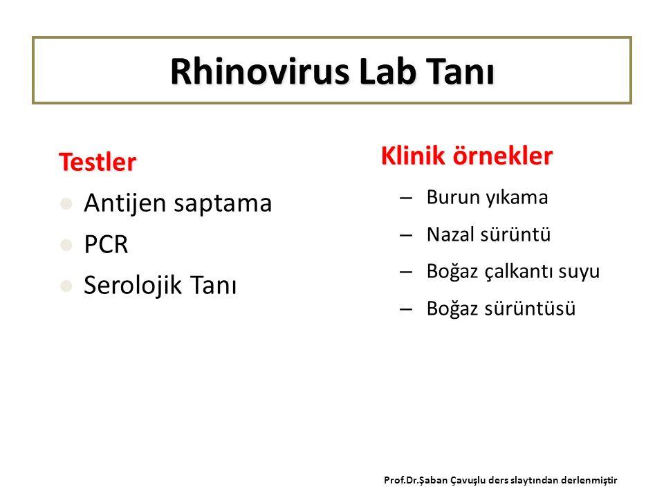 Rhinovirus Lab Tanı Klinik örnekler – Burun yıkama – Nazal sürüntü – Boğaz çalkantı suyu – Boğaz sürüntüsü Testler Antijen saptama PCR Serolojik Tanı Prof.Dr.Şaban Çavuşlu ders slaytından derlenmiştir