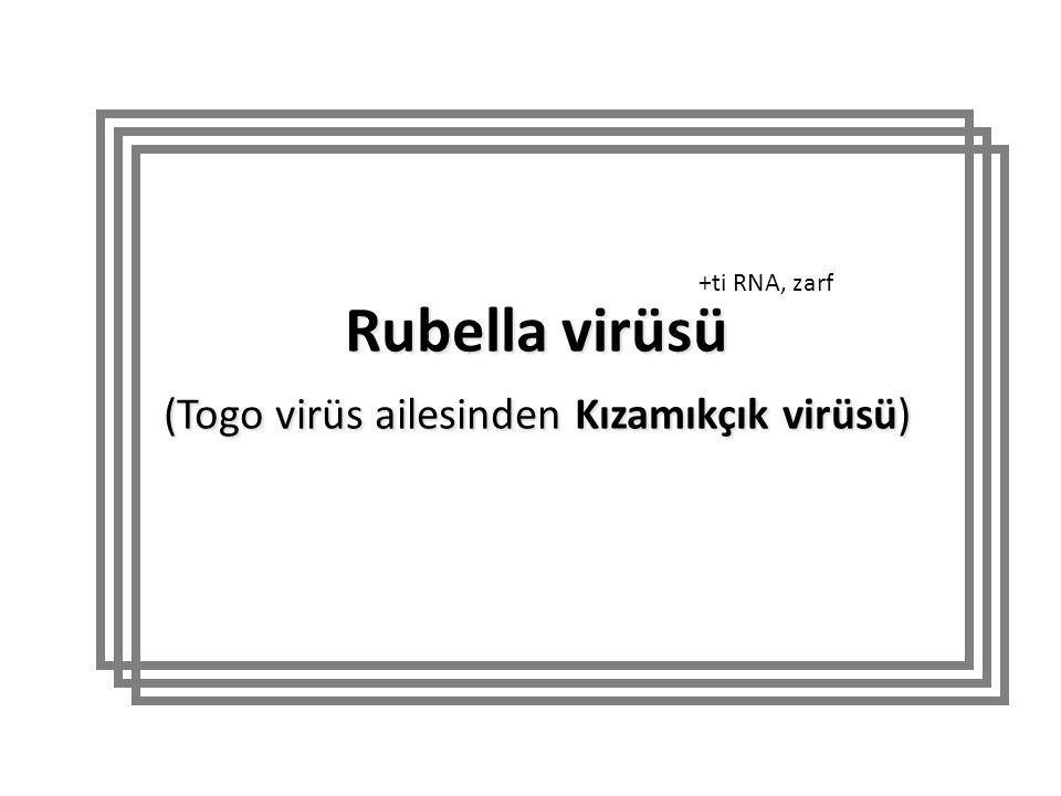 Rubella virüsü (Togo virüs ailesinden Kızamıkçık virüsü) +ti RNA, zarf