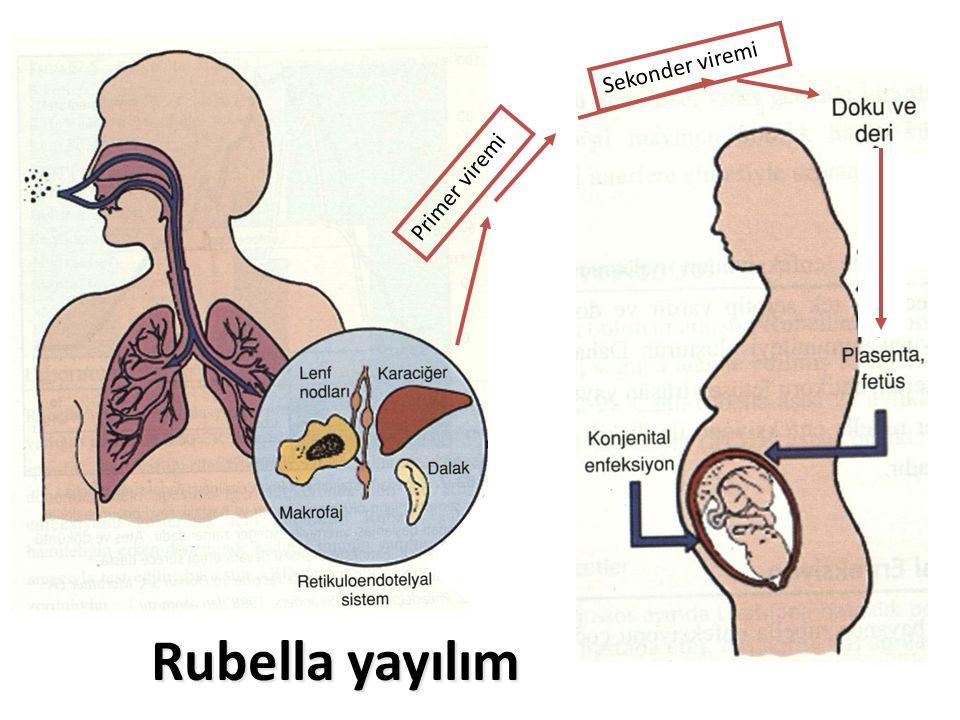 Rubella yayılım Primer viremi Sekonder viremi