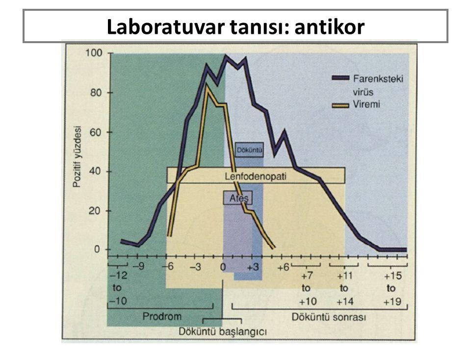 Laboratuvar tanısı: antikor