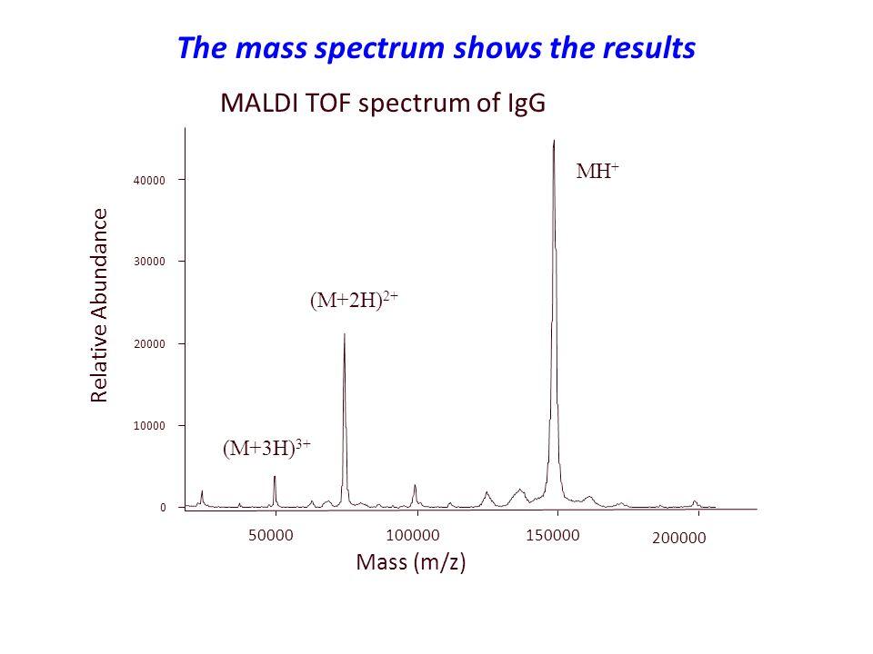 The mass spectrum shows the results Relative Abundance Mass (m/z) 0 10000 20000 30000 40000 50000 100000 150000 200000 MH + (M+2H) 2+ (M+3H) 3+ MALDI TOF spectrum of IgG