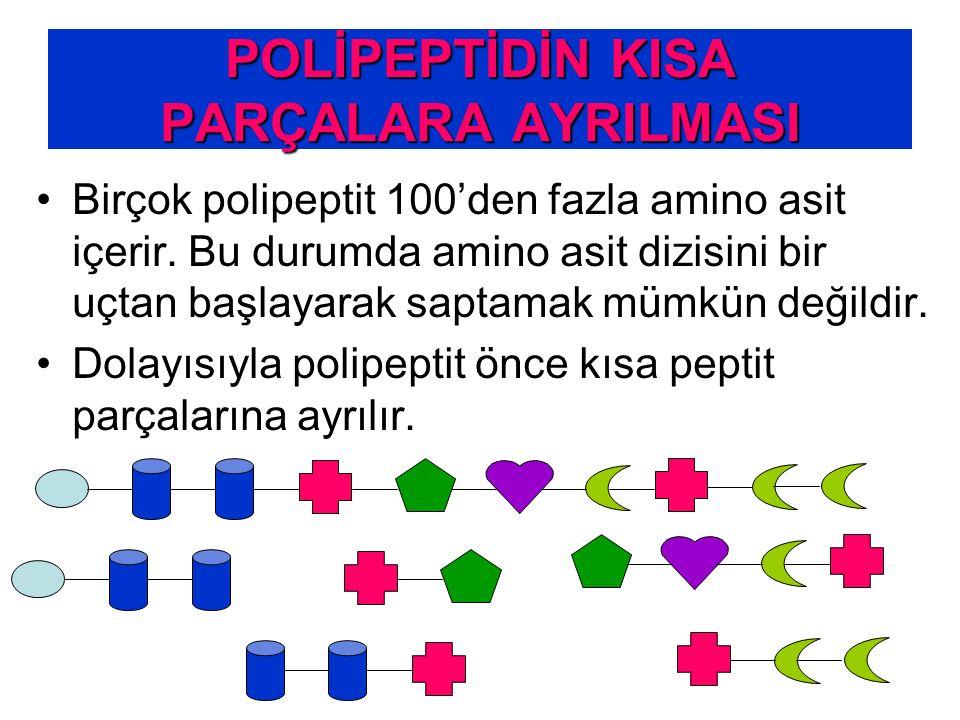 POLİPEPTİDİN KISA PARÇALARA AYRILMASI Birçok polipeptit 100'den fazla amino asit içerir. Bu durumda amino asit dizisini bir uçtan başlayarak saptamak