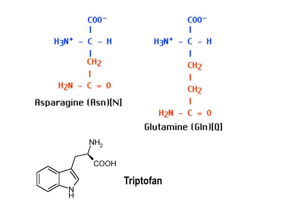 Glutamin  Glutamik asit + NH 3 Asparagin  Aspartik asit + NH 3 Triptofan  parçalanır Triptofanı belirlemek için ayrı bir örnek NaOH ile hidrolezlenir (BAZİK HİDROLİZ).