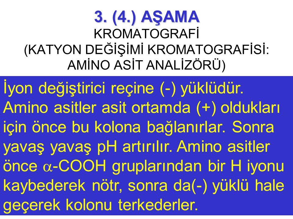 3. (4.) AŞAMA 3. (4.) AŞAMA KROMATOGRAFİ (KATYON DEĞİŞİMİ KROMATOGRAFİSİ: AMİNO ASİT ANALİZÖRÜ) İyon değiştirici reçine (-) yüklüdür. Amino asitler as