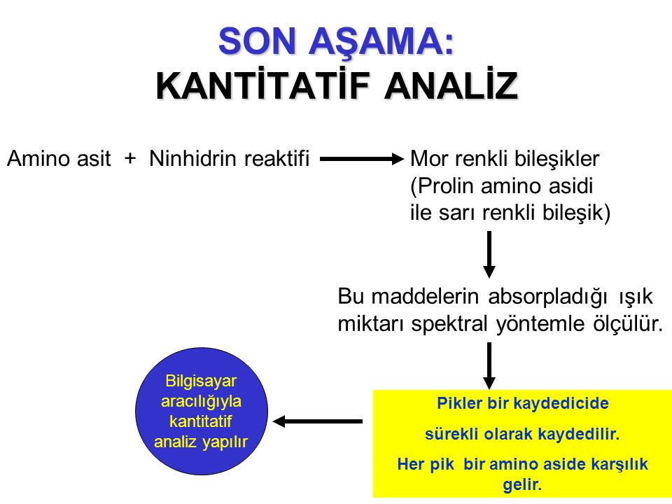 SON AŞAMA: KANTİTATİF ANALİZ Amino asit + Ninhidrin reaktifi Mor renkli bileşikler (Prolin amino asidi ile sarı renkli bileşik) Bu maddelerin absorpla