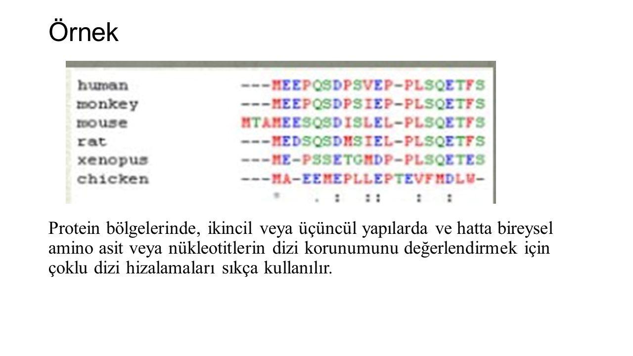 Örnek Protein bölgelerinde, ikincil veya üçüncül yapılarda ve hatta bireysel amino asit veya nükleotitlerin dizi korunumunu değerlendirmek için çoklu