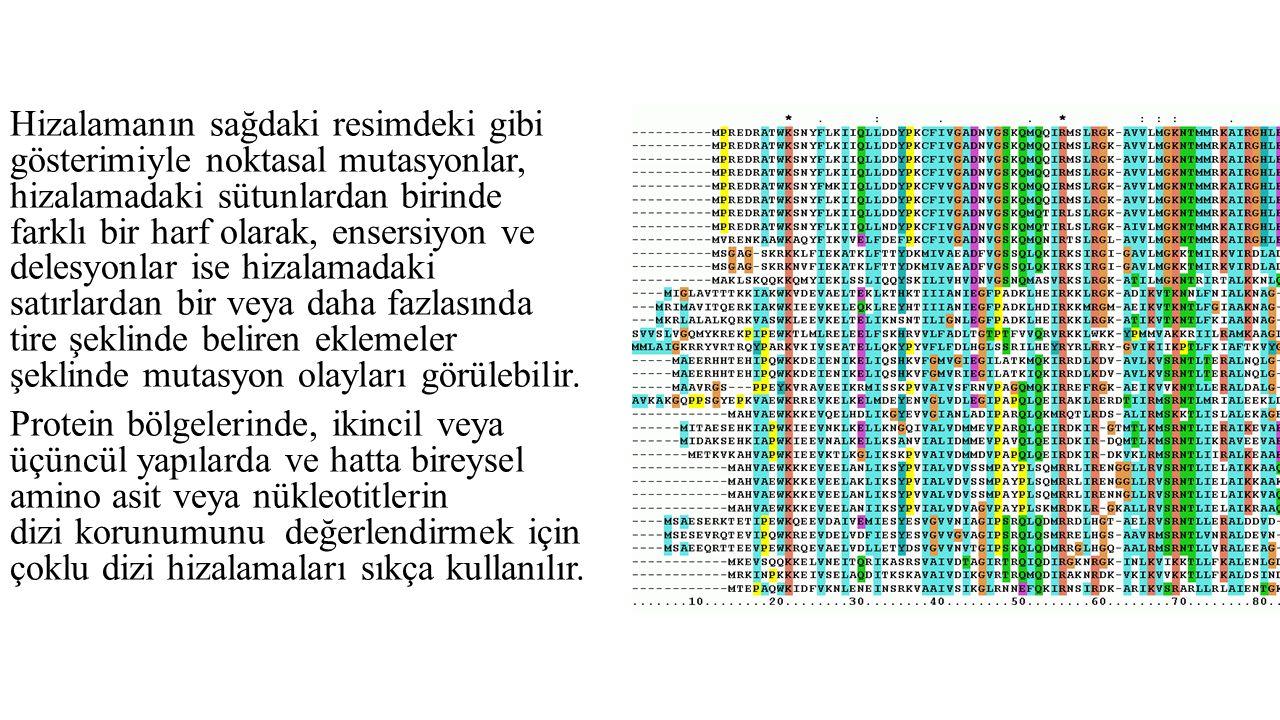 Hizalamanın sağdaki resimdeki gibi gösterimiyle noktasal mutasyonlar, hizalamadaki sütunlardan birinde farklı bir harf olarak, ensersiyon ve delesyonl