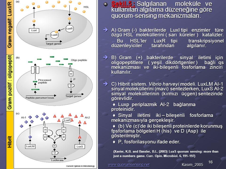 16Murat Kemal AVCI_GYTE Şekil.5 : Salgılanan moleküle ve kullanılan algılama düzeneğine göre quorum-sensing mekanizmaları.
