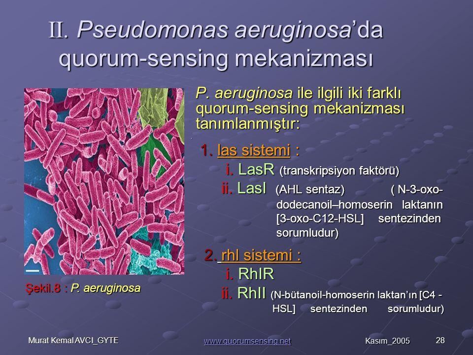 28Murat Kemal AVCI_GYTE II.Pseudomonas aeruginosa'da quorum-sensing mekanizması P.