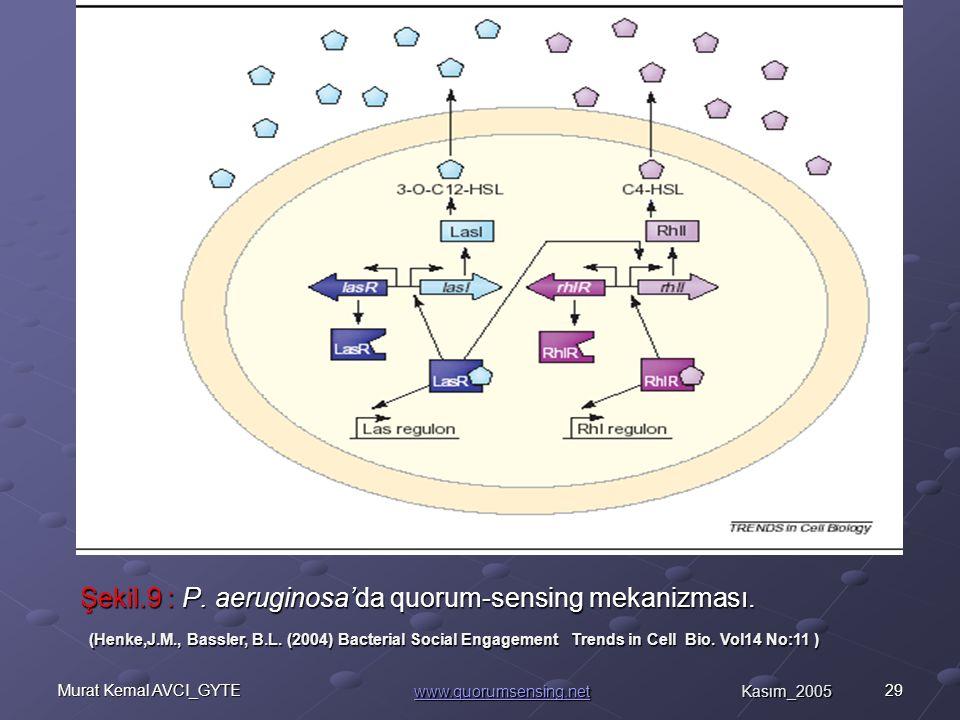 29Murat Kemal AVCI_GYTE Şekil.9 : P.aeruginosa'da quorum-sensing mekanizması.