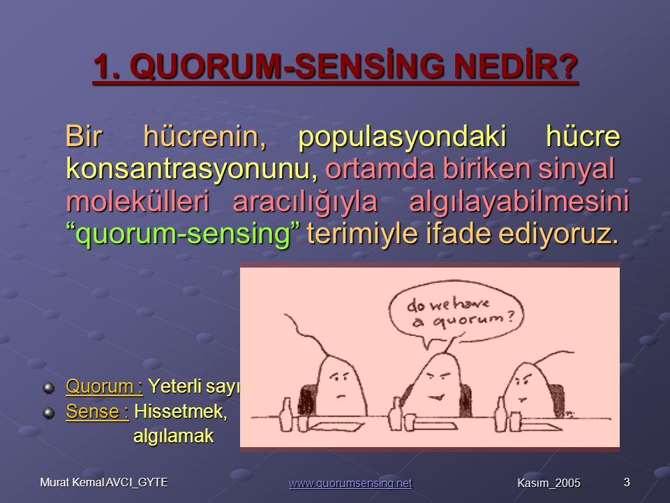 24Murat Kemal AVCI_GYTE dfd Tablo.3 : Gram pozitif bakterilerde A) Quorum sensing ile düzenlenen davranışlar ve B) Salgılanan moleküller davranışlar ve B) Salgılanan moleküller Kompetens, Spor oluşum Virülans, biyofilm oluşumu Nisin üretimi Kompetens, A) B) E : Glutamik asit, R: Arginin, T:Threonin, P: Prolin, D: Aspartik asit, Q: Glutamin, W: Triptofan, (Henke,J.M., Bassler, B.L.