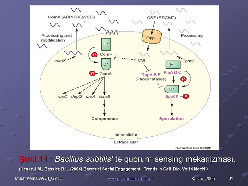 31Murat Kemal AVCI_GYTE Şekil.11 : Bacillus subtilis' te quorum sensing mekanizması.