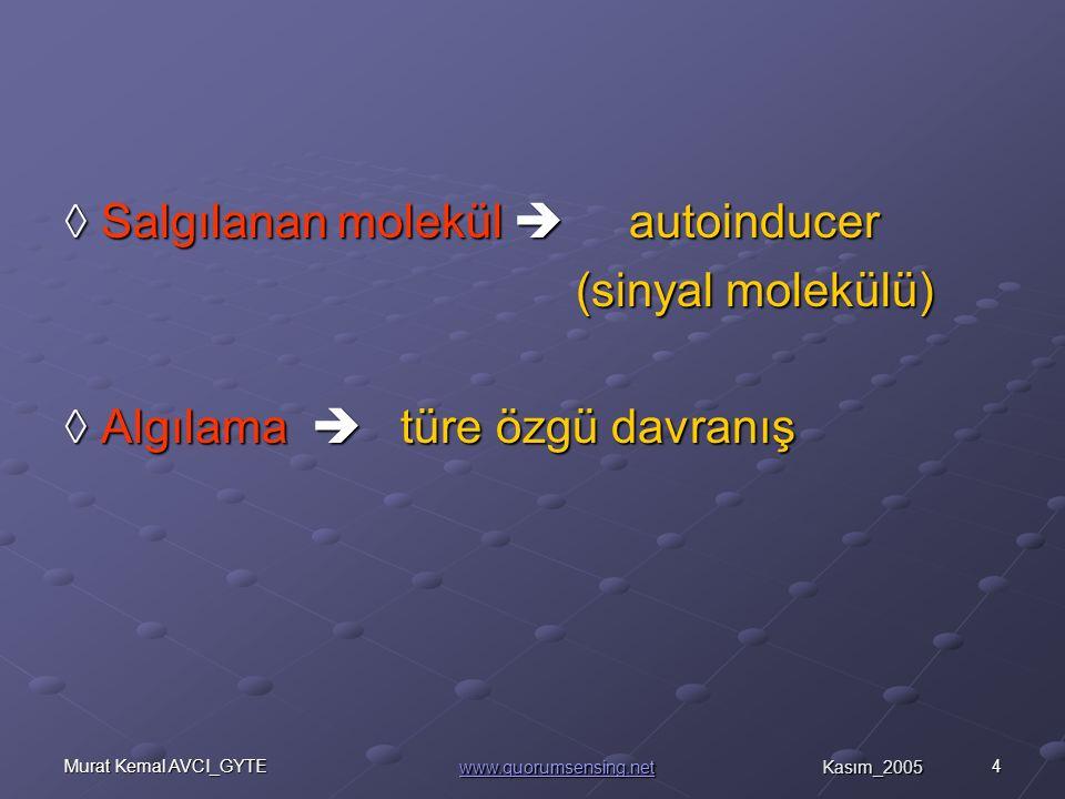 4Murat Kemal AVCI_GYTE ◊ Salgılanan molekül  autoinducer (sinyal molekülü) (sinyal molekülü) ◊ Algılama  türe özgü davranış www.quorumsensing.netwww.quorumsensing.net Kasım_2005