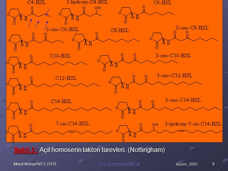 10Murat Kemal AVCI_GYTE Şekil.4 : Autoinducer moleküllerin çeşitleri.