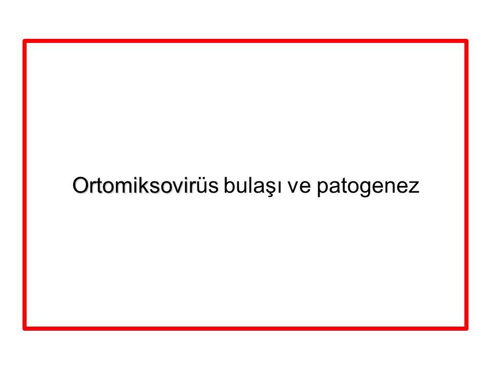 Ortomiksovir Ortomiksovirüs bulaşı ve patogenez