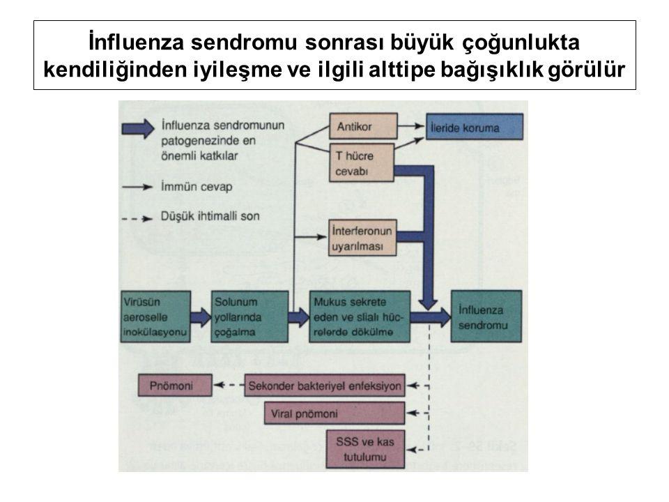 İnfluenza sendromu sonrası büyük çoğunlukta kendiliğinden iyileşme ve ilgili alttipe bağışıklık görülür