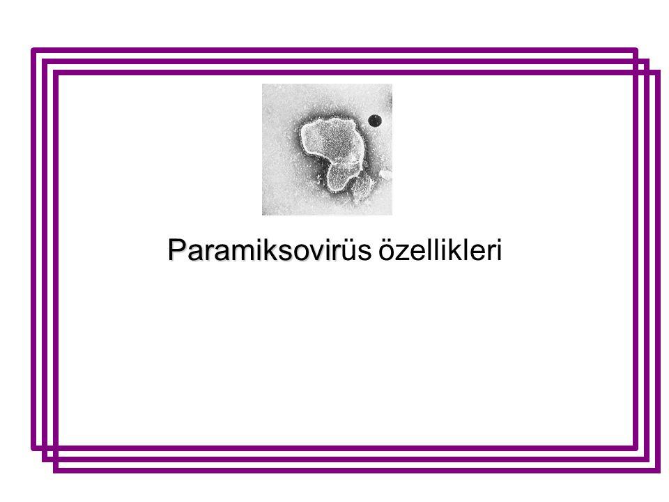 Paramiksovir Paramiksovirüs özellikleri