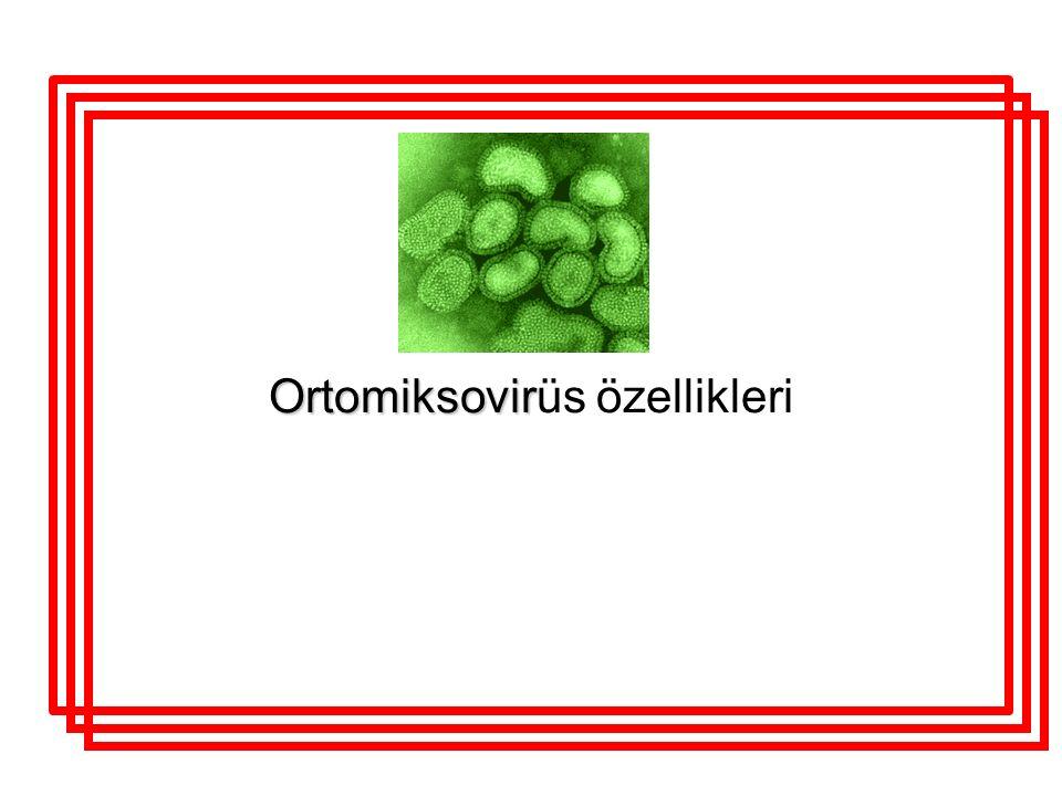 Ortomiksovir Ortomiksovirüs özellikleri