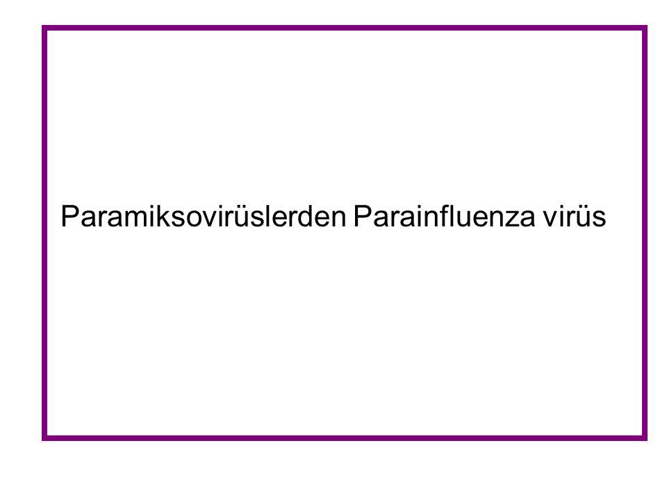 Paramiksovirüslerden Parainfluenza virüs