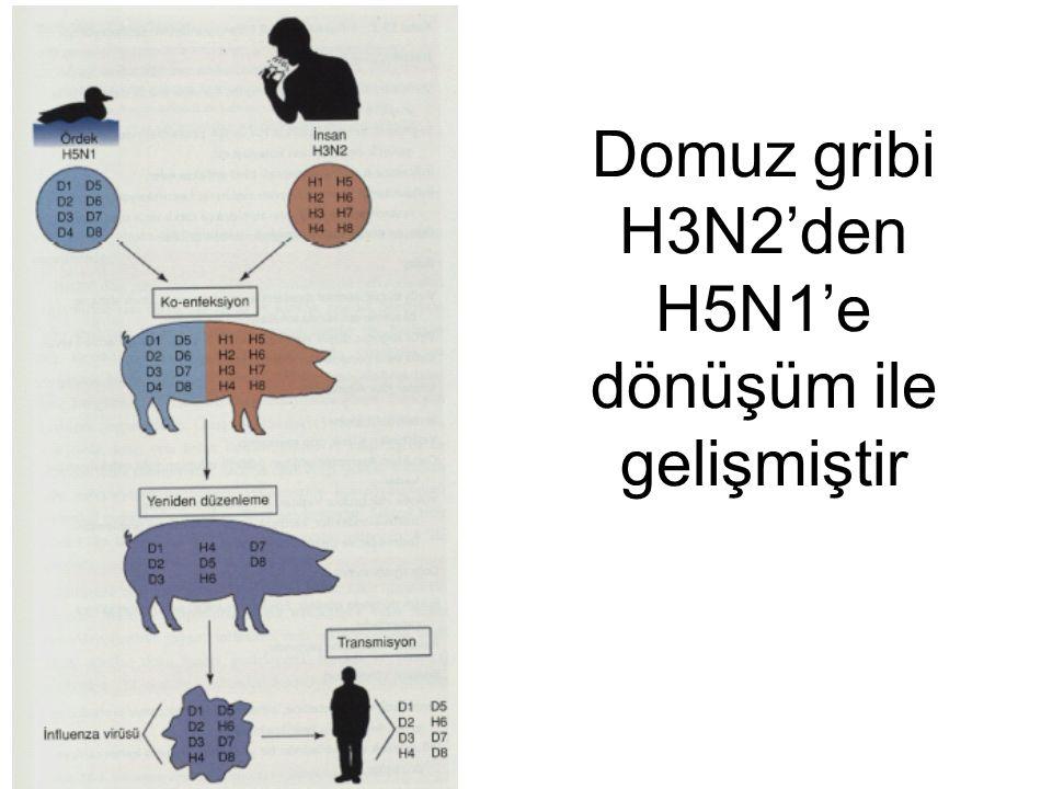 Domuz gribi H3N2'den H5N1'e dönüşüm ile gelişmiştir