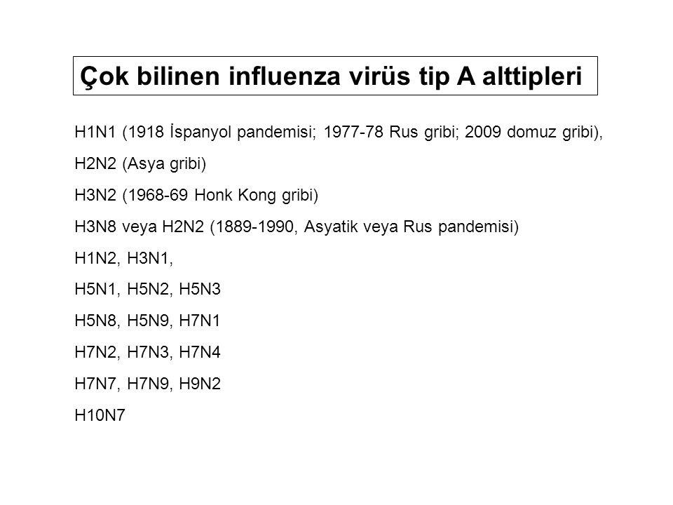 H1N1 (1918 İspanyol pandemisi; 1977-78 Rus gribi; 2009 domuz gribi), H2N2 (Asya gribi) H3N2 (1968-69 Honk Kong gribi) H3N8 veya H2N2 (1889-1990, Asyatik veya Rus pandemisi) H1N2, H3N1, H5N1, H5N2, H5N3 H5N8, H5N9, H7N1 H7N2, H7N3, H7N4 H7N7, H7N9, H9N2 H10N7 Çok bilinen influenza virüs tip A alttipleri