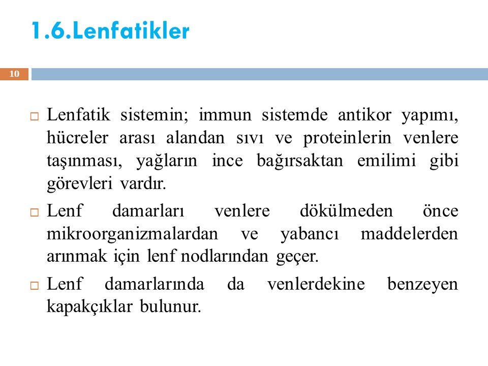 1.6.Lenfatikler  Lenfatik sistemin; immun sistemde antikor yapımı, hücreler arası alandan sıvı ve proteinlerin venlere taşınması, yağların ince bağır