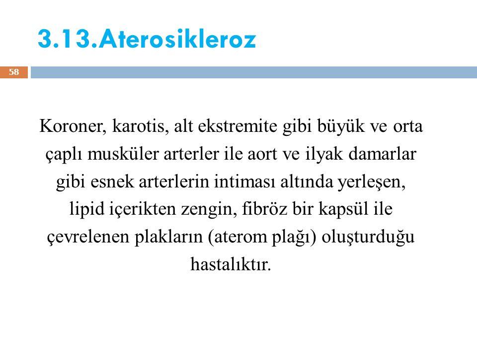 3.13.Aterosikleroz Koroner, karotis, alt ekstremite gibi büyük ve orta çaplı musküler arterler ile aort ve ilyak damarlar gibi esnek arterlerin intima