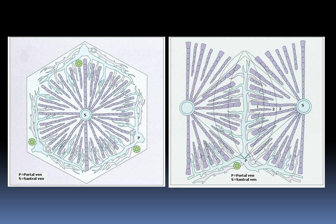 Kanamadan Koruma  Primer proflaksi: B bloker±EBL  Sekonder proflaksi:  Endoskopik band ligasyonu (EBL)  Endoskopik sklerozan madde enjeksiyonu  TIPS  Cerrahi  Şant cerrahisi  Karaciğer nakli
