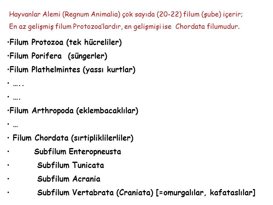 Hayvanlar Alemi (Regnum Animalia) çok sayıda (20-22) filum (şube) içerir; En az gelişmiş filum Protozoa'lardır, en gelişmişi ise Chordata filumudur. F