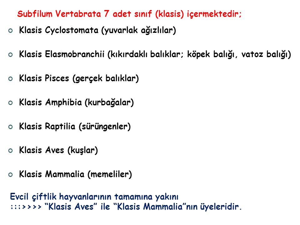 Subfilum Vertabrata 7 adet sınıf (klasis) içermektedir; Klasis Cyclostomata (yuvarlak ağızlılar) Klasis Elasmobranchii (kıkırdaklı balıklar; köpek bal
