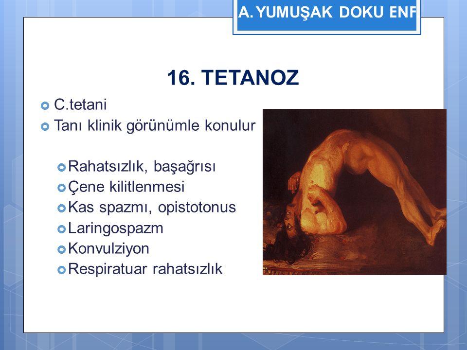 16. TETANOZ  C.tetani  Tanı klinik görünümle konulur  Rahatsızlık, başağrısı  Çene kilitlenmesi  Kas spazmı, opistotonus  Laringospazm  Konvulz